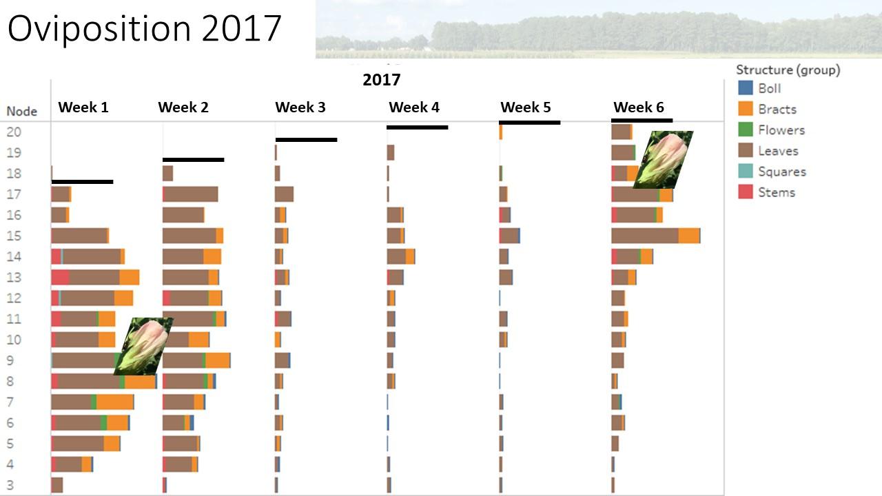 2017 chart image