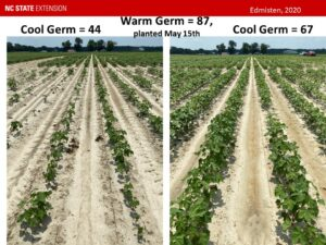 Cover photo for Your Role and Responsibility in Making the NCDA&CS Cotton Seed Quality Testing Program Work to Your Benefit (Collins, Edmisten, Stewart, Wilson, Snyder, & Williams)