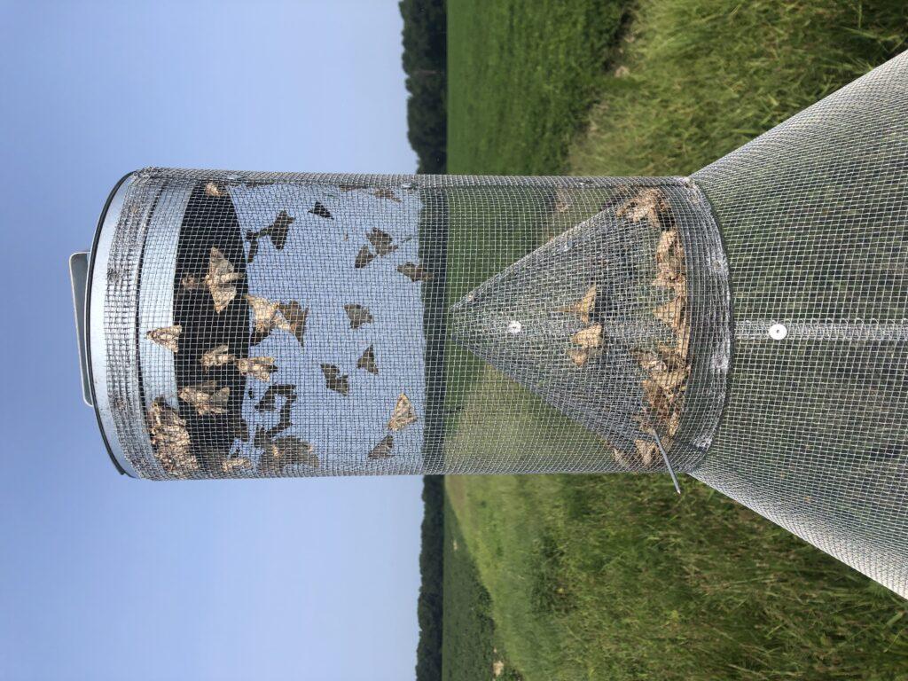 Moth trap
